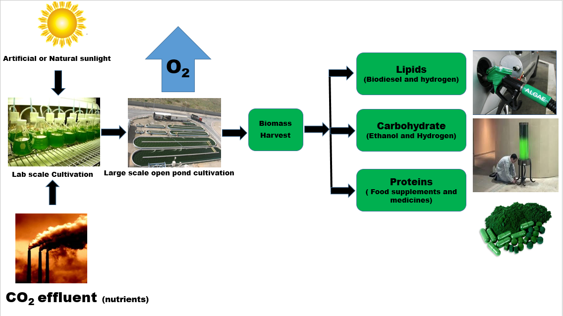 biomass power plant thesis